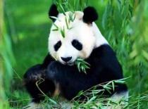 九寨沟、松坪沟、熊猫乐园纯玩3日游(赠送藏家土火锅,2晚高级准四星)